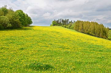 Countryside in Sumava national park