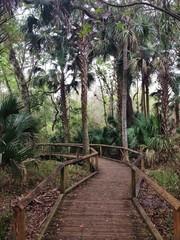 Boardwalk Through the Rainforest