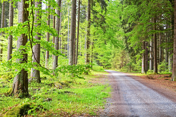 Country road in a forest, Sumava national park