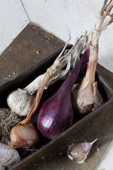 vintage box with freshly harvested garlic and onions
