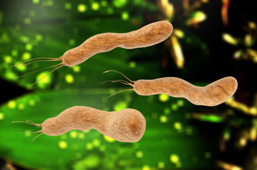 Helicobacter pylori - 3d rendered illustration