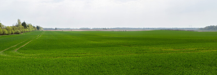 green fields panorama