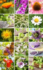 Heilpflanzen - Medizin