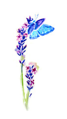 Summer lavender flowers and butterflies isolated, watercolor