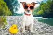 dog summer vacation - 67771598