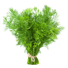Dill herb isolated