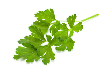 Parsley aromatic herb