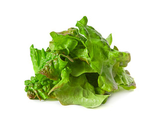 Ragged lettuce salad leaf