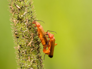Two bugs on a stem