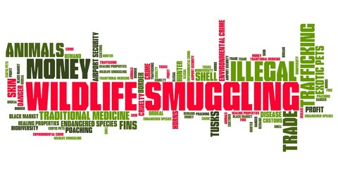 Animal smuggling - word cloud illustration