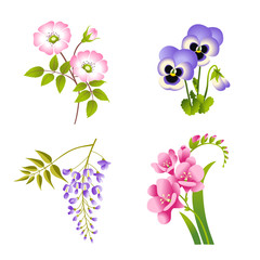 Roses, Pansy, Wisteria and Fuchsia flowers set