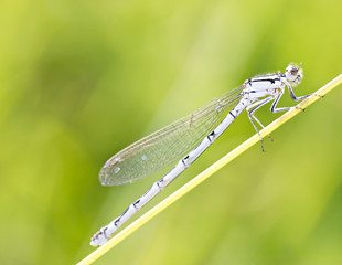 Dragonfly on stem