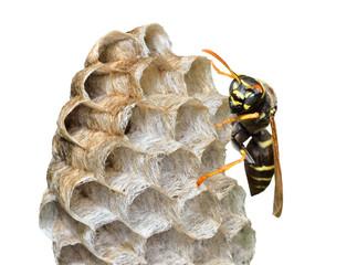 Small wasp 10