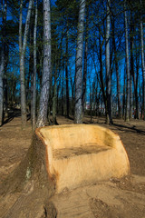 My space in nature: big wooden bench in old stump