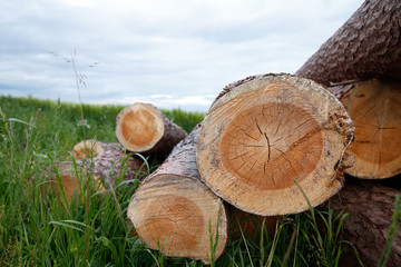 Close up of stacked tree trunks in the meadow