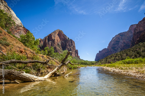 canvas print picture Virgin river in Zion National Park, Utah