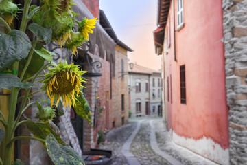 Castel Arquato Girasole Tra le vie
