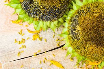 Background flower sunflower seeds wooden countertop