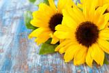 Fototapety Sunflowers.