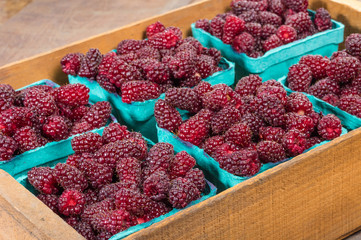 Fresh Tayberries in boxes at market