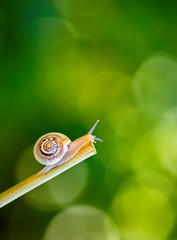 Macro of a snail on an green background with bokeh effect