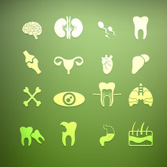 icons of internal human Retina Vector