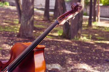 Cello in a landscape.