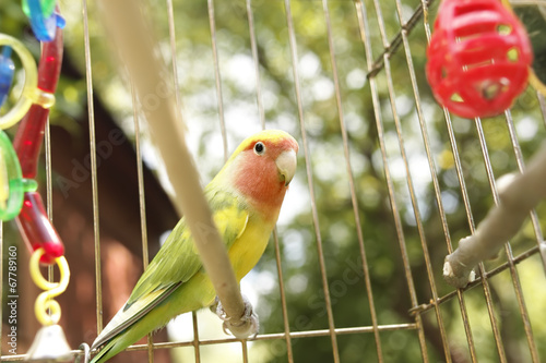 Foto op Canvas Papegaai Parrot in a cage