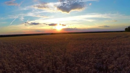 aerial wheat field at sunset