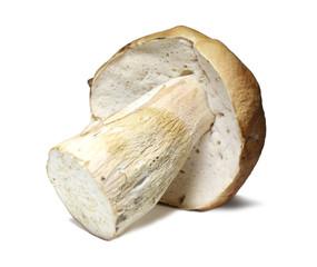 Cepe mushroom isolated on white
