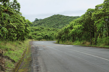 Cloud forest and road in the highlands of Santa Cruz