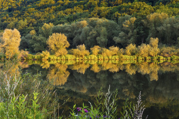 Reflections on the Mosel shore