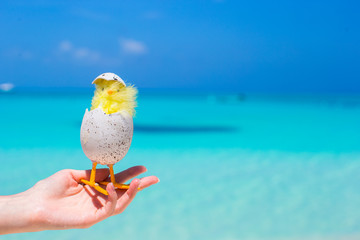 Small yellow easter chicken on the white beach