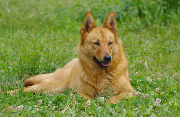 Young mixed breed dog having rest in the spring grass