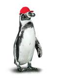Funny penguin with baseballcap.