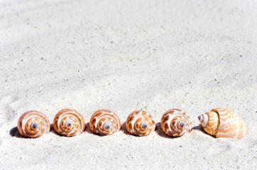 Muscheln in einer Reihe am Strand
