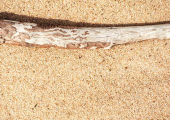 Dry branch on the sand