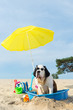 canvas print picture - cooling down for dog at the beach