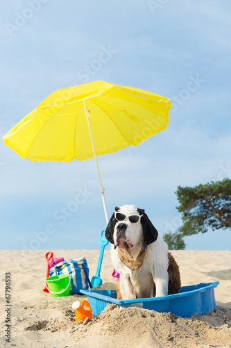 canvas print picture cooling down for dog at the beach