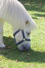 White Pony 003