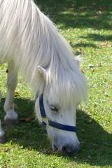 White Pony 015