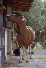 Horse in love