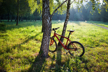 Red bike standing near a birch trunk on a spring sunny park