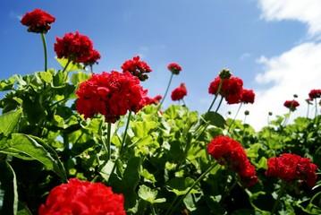 flores rojas contra el cielo