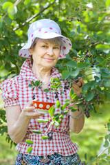 Senior female in garden standing near bushes of mespilus