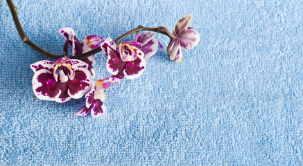 Рink orchid on blue background