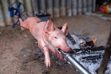 Spit roasted pig