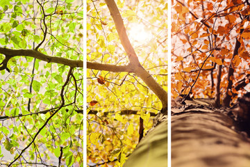 Herbstfarben – Collage