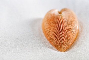 red heart sea shell in beach white sand