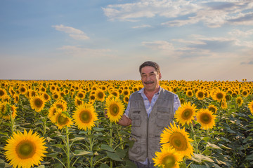 Farmer looking at sunflower